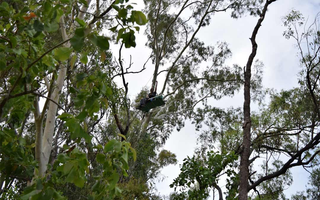 Anti-Adani activist in tree sit stops coal entering Adani's Abbot Point Coal Terminal